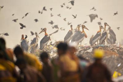 https://www.sandeshkadur.com/images/posts/t/Kadur_Sandesh_Community_01.jpg