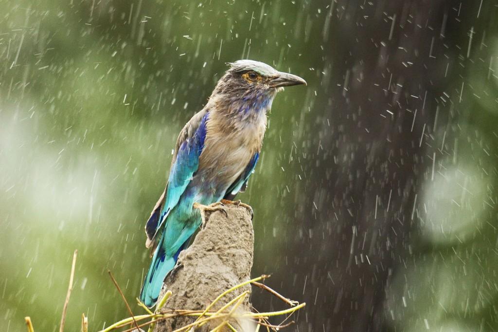 rainy season in india essay