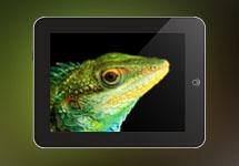 Sahyadris - Interactive iPad App